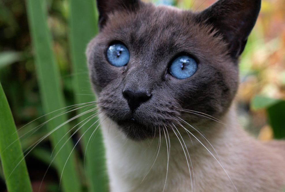 cat-2615180_1920