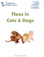 Fleas in Dogs and Cats